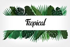 Tropic leaves background with frame for your text. Eps10 vector template. Tropic leaves background with frame for your text. Eps10 vector template Royalty Free Stock Photography