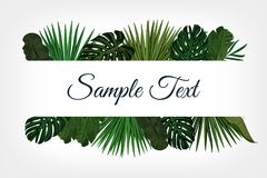 Tropic leaves background with frame for your text. Eps10 vector template. Tropic leaves background with frame for your text. Eps10 vector template Royalty Free Stock Photo