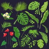 Tropic Leaves and Flowers Set. Tropical flowers and leaves isolated on dark background. Tropic plant set. Vector flat illustration vector illustration