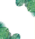 Tropic leaves with sunshine. Tropic background. Royalty Free Stock Photos