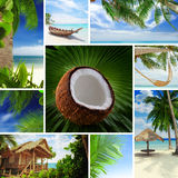 Tropic  mix Stock Photo