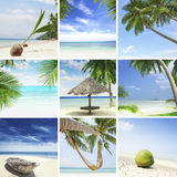 Tropic mix Royalty Free Stock Images