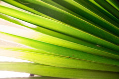 Tropic palm leaf in macro picture with abstract lines Stock Photo
