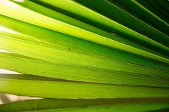 Tropic palm leaf in macro picture with abstract lines Royalty Free Stock Photography