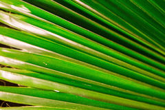 Tropic palm leaf in macro picture with abstract lines Stock Photos