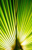 Tropic palm leaf in macro picture with abstract lines Royalty Free Stock Image