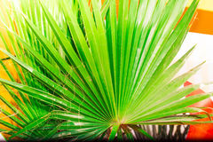 Tropic palm leaf in macro picture with abstract lines Royalty Free Stock Images