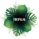 Tropic palm leaves background. Vector exotic jungle view with leaves Stock Image
