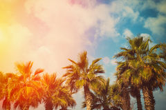 Tropic palm trees Stock Images