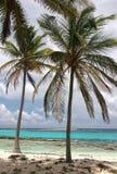 Tropic palms. On a sandy beach on famous island Half Moon Caye. Caribbean sea. Belize Stock Photos