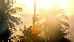 Tropic palms at the golden sky sunset stock video footage