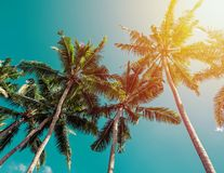 Tropic palms over the clean blue sky on a sunny day, view from the ground. Toned photo royalty free stock photos