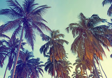 Tropic Palms, Toned Photo Stock Image