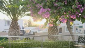Tropic resort view. Tropic resort blooming tree with sunbeam in the background stock footage