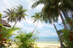Tropic scene Stock Image