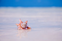 Tropic seashell sand sun and blue ocean Stock Photography
