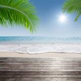 Tropic shore Royalty Free Stock Image