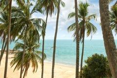 Tropic shore Royalty Free Stock Photography