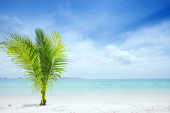Tropic site stock photography