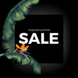 Tropic summer night sale on black with Spathiphyllum leaves Stock Image