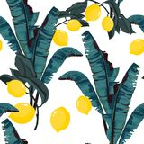 Tropic summer painting seamless vector pattern with palm banana leaf and lemons. Floral jungle pattern stock illustration