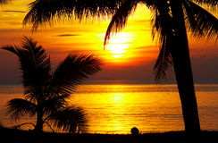 Tropic sunset. View of palms black outlines during sunset on the beach Stock Photography