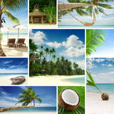 Tropic mix. Tropic theme collage composed of different images Royalty Free Stock Photo