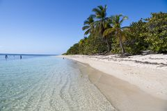 Lush vegetation on natural beach in Tropes. Tropic vegetation with palms on natural beach with clear sea, Isla de la Juventud, Cuba Stock Photography