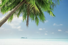 Tropic view Stock Image
