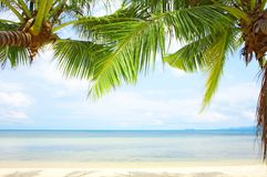 Tropic view Royalty Free Stock Image
