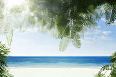 Tropic view Royalty Free Stock Photo