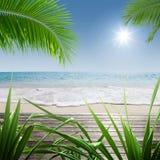 In tropic Stock Image