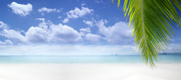 Tropic wide banner Royalty Free Stock Photos
