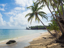 Tropica beach. With cocononuts palm on a caribbean island Royalty Free Stock Images