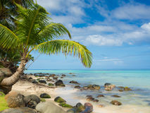 Tropica beach. With cocononuts palm on a caribbean island Stock Image