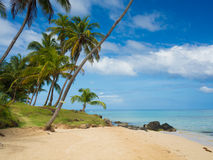 Tropica beach. With cocononuts palm on a caribbean island Royalty Free Stock Photography