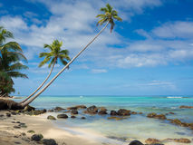 Tropica beach. With cocononuts palm on a caribbean island Royalty Free Stock Photo