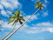 Tropica beach. With cocononuts palm on a caribbean island Stock Photography