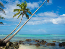 Tropica beach. With cocononuts palm on a caribbean island Royalty Free Stock Photos