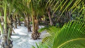 Tropica grönskaplats arkivbild
