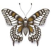 Tropica motyl z cieniem na odosobnionym białym tle realistyczna ballons ilustracja Tatuażu motyl ilustracji