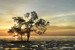Tropica solnedgång på udden Arkivfoto