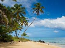 Tropica Strand Stockfotografie