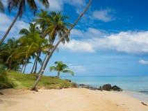 Tropica Strand Lizenzfreie Stockfotografie