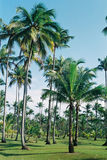 Tropical imagem de stock royalty free