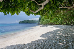 Tropical Stock Photography