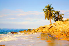 Tropical Royalty Free Stock Image