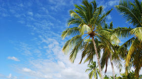 Tropical. Beautiful tropical background with palm trees and blue skies in Caribbeans Stock Image