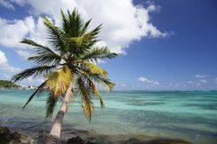 Tropical Royalty Free Stock Photo