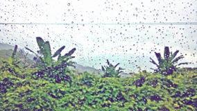 tropical Imagem de Stock